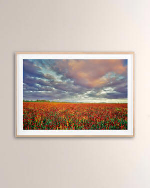 "Grand Image Home ""Crimson Clover"" Digital Art Print by PhotoDF"